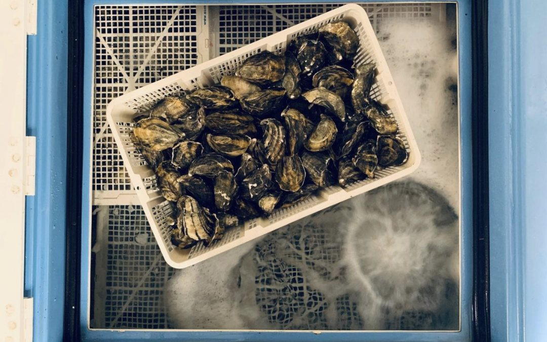 As Seen In The Media – Smart Oysters